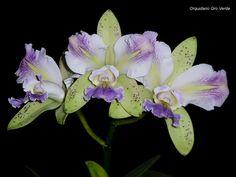 Resultado de imagen para flores de migajon