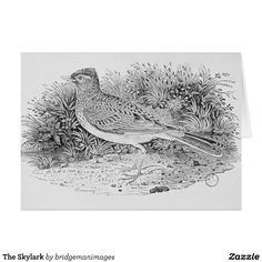 The Skylark Greeting Card