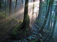 Descargar Bosque, rayos de luz HD verde oscuro naturaleza azul escritorio hd 43