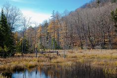 #ADK #Adirondacks - The South Shore of Bald Mountain Pond - Old Forge, New York.
