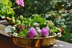 Jak si poradit s nespavostí, únavou, vyčerpáním a ztrátou vnitřní energie? - Doporučujeme - ŽENY S.R.O. Forest Fruits, Planting Shrubs, Cool Wallpaper, Berries, Bloom, Leaves, Orange, Flowers, Green