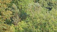 Piękno przyrody, które na Ciebie czeka http://karczmisko.pl/pl/galeria