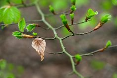 The trees are budding - they will be in blossom in the next few weeks. #rspb #spring #getoutdoors