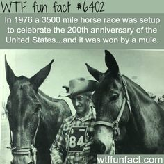 WHOA! ...A 3500 mile horse race was won by a mule!  ~WTF awesome & fun facts
