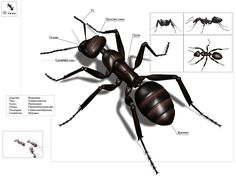 Ant by Nik-Ants on DeviantArt