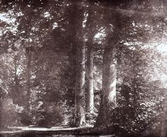 Beech trees at Lacock, c 1841., Talbot, William Henry Fox, © National Media Museum / Science & Society Picture Library