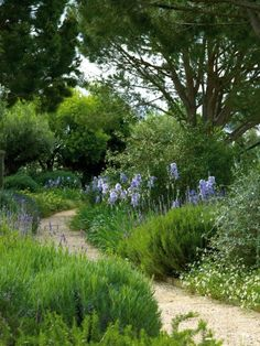 Iris and more...love the winding path and serenity.