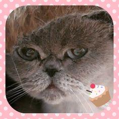 Dories B-Day ❤️😺🌷 Animals, Pictures, Animales, Animaux, Animal, Animais