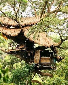 There are many ways to get to a treehouse. Zip...