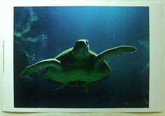 $20.99 Underwater Aquatic Ocean Art Print, Aegean Sea Turtles II by Vision Studio