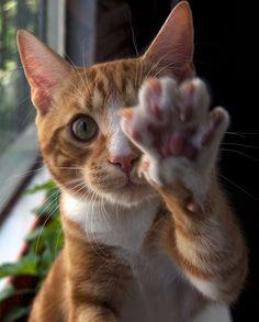 """shy kitty says """"No photos"""""""