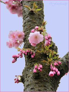 """fotofreddy: """"Blossom on the tree trunk """" Flower Bird, Flower Branch, Exotic Flowers, Beautiful Flowers, Picture Tree, Spring Blossom, Flower Aesthetic, Spring Day, Flower Pictures"""