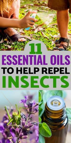 oil bug repellant 11 Essential Oils That Repel Bugs, Insects, and Pests Naturally! 11 Essential Oils That Repel Bugs, Insects, and Pests Naturally! Mosquito Repellent Essential Oils, Essential Oil Bug Spray, Insect Repellent Spray, Basil Essential Oil, Fly Repellant, Natural Mosquito Repellant, List Of Essential Oils, Geranium Essential Oil, Gardens