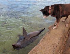 Seal - Pup