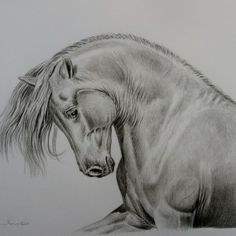 Untitled Spiritual Connection, Cattle, Art Drawings, Horses, Animals, Gado Gado, Animales, Animaux, Animal