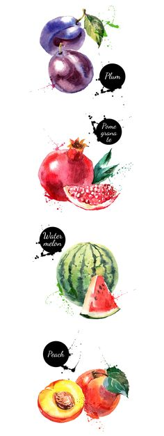 20 Watercolor Fruit Vectors   -  https://www.designcuts.com/product/20-watercolor-fruit-vectors/