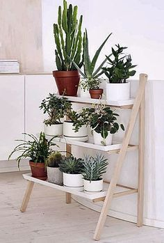 Como ter e manter plantas em pequenos espaços | Simples Decoracao | Simples Decoração