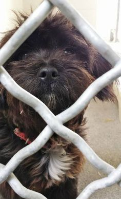 ADOPTED----This little guy is just 8 months and he is super cute but super sad. Please SHARE, he needs some help out. Thanks!  #A4813159 I'm an approximately 8 month old male terrier. I am not yet neutered. I have been at the Carson Animal Care Center since March 30, 2015. I will be available on April 3, 2015. You can visit me at my temporary home at C236.  http://www.petharbor.com/pet.asp?uaid=LACO1.A4813159  Carson Shelter, Gardena, California
