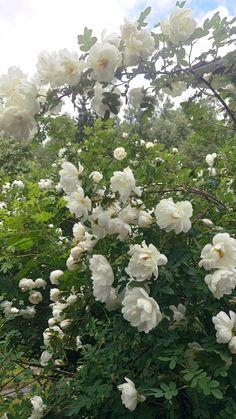 Daily Journal, Boho Decor, Flora, Gardening, Fantasy, Inspired, Rose, Creative, Plants