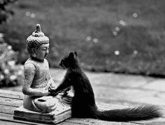 BE QUIET. Squirrel is achieving inner peace!