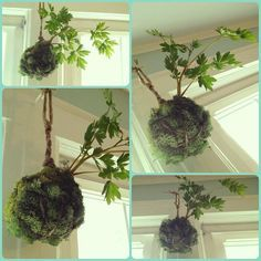 Unique Hanging Kokedama Ball Ideas for Hanging Garden Plants selber machen ball