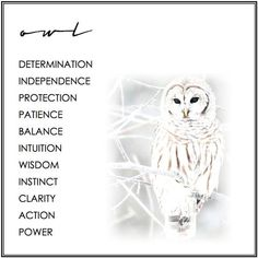 Spirit Animal Totem, Animal Spirit Guides, Spirit Animal Tattoo, Animal Meanings, Symbols And Meanings, Owl Tattoo Meaning, Owl Quotes, Wisdom Quotes, Qoutes