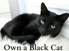 Everyone should own a black kitty