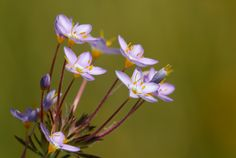 Some of the flowers growing at ground level were amazingly small