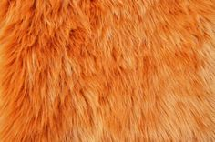 Amber Fur Fabric FREE SHIPPING 12x12 and 20x20 by ModernPelage