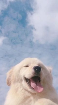 Cute dog video dog dogs video animal animals pet pets aght ll 2 se tieredition aght animal cute edition cats wallpaper aght animal cats cute edition ll se tieredition wallpaper Cute Funny Animals, Cute Baby Animals, Animals And Pets, Funny Dogs, Wild Animals, Cute Dogs And Puppies, Pet Dogs, Dog Cat, Doggies