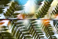 New Zealand Native Ponga or Punga Tree Fern Frond royalty-free stock photo Fern Frond, Tree Fern, Abstract Photos, Image Now, Ferns, New Zealand, Nativity, Filter, Royalty Free Stock Photos