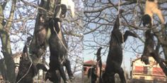"""Demand justice for hanging of stray dogs in Serbia 