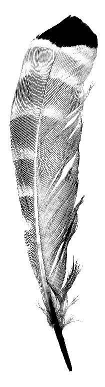 Lithography feather