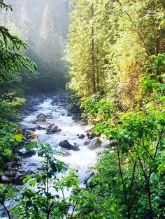 Mountain Stream, #Montana