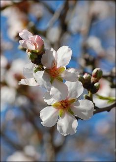 Someone might look at and admire an almond blossom for its beauty, but I have a different perspective. I have lived in a small farming community all my life. My father is a walnut and almond farmer, and these blossoms produce our livelihood. People around the world farm and produce crops to help feed the world.