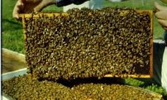 honey is good Busy Bee, Bee Happy, Bee Keeping, Little Gifts, Cool Pictures, Cancer, Wood, Mai, Honey Bees