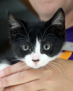 Adopted! Tucker is a 2 month old kitten ready for adoption!