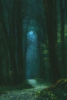 Mixed forest trail night hills background study of atmospheric perspective at night Forest Path, Dark Forest, Night Forest, Forest Trail, Misty Forest, Magic Forest, Photo Snapchat, Mystical Forest, Nature Aesthetic