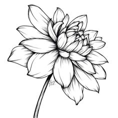 for today's prompt. This is actually one of my favorites! I just planted some dahlias in my… Flower Line Drawings, Flower Sketches, Drawing Sketches, Pencil Drawings, Art Drawings, Drawing Ideas, Illustration Blume, Floral Drawing, Daisy Drawing