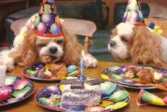 Even when merry-making, the cavalier takes eating VERY seriously!