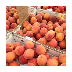 peach, fruit, and orange image Peach Aesthetic, Aesthetic Food, Aesthetic Pastel, Think Food, Love Food, Just Peachy, Fruits And Veggies, Cravings, Food Porn