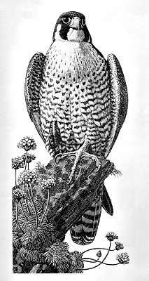 Tunnicliffe Society - Etchings & Engravings