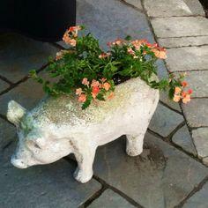 The garden pig