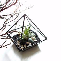 Desk terrarium