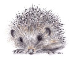 hedgehog drawing for framing