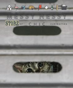 We are opening our store of chic curiosities on December the 1st!