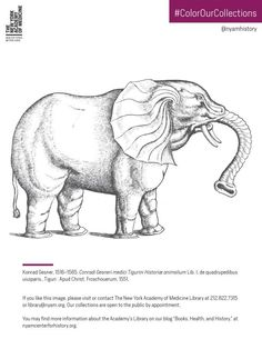Elephant from Gesner, Historiae Animalium, Liber I, 1551. Click to download the…