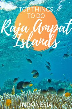 Ultimate guide to visiting the Raja Ampat Islands in Indonesia. Includes how to get there, when to go, things to do, facts and tips for a great visit. Travel Advice, Travel Guides, Travel Tips, Travel Articles, Time Travel, Amazing Destinations, Travel Destinations, Raja Ampat Islands, Travel Around The World
