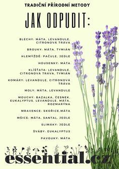 Healthy Life, Indoor Outdoor, Garden Design, Life Hacks, Diy And Crafts, Flora, Tips, Nature, Plants