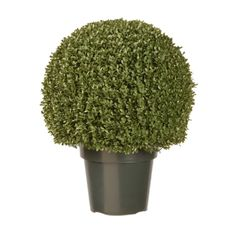 National Tree 22-Inch Mini Boxwood Ball Plant in 18-Inch Diameter Green Pot *** You can get more details by clicking on the image.